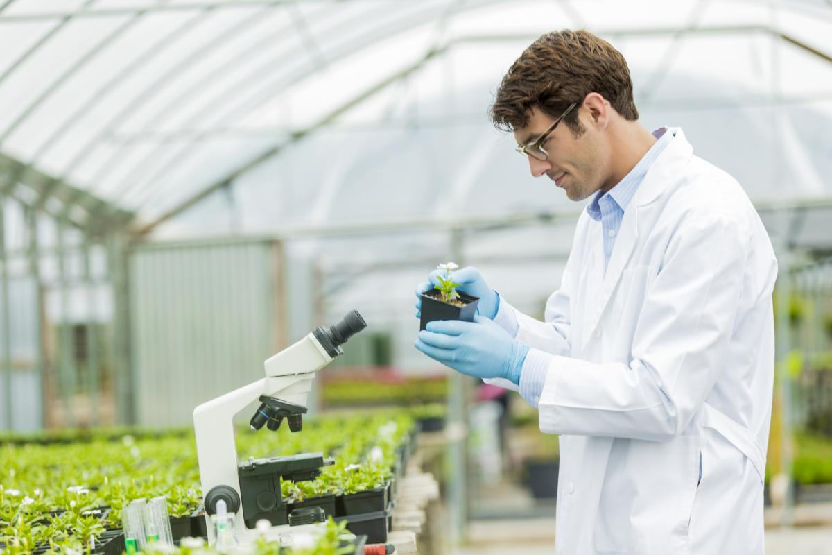 Plant genetics and breeding pdf