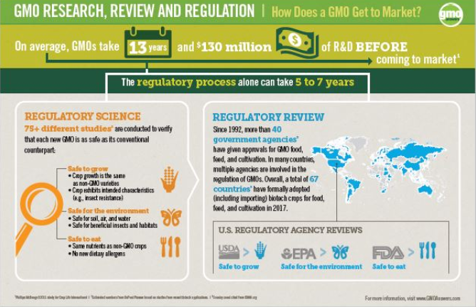How Does a GMO Get to Market?