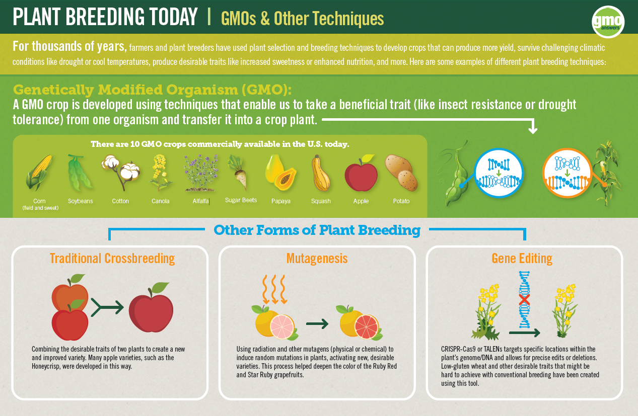 Plant Breeding Today
