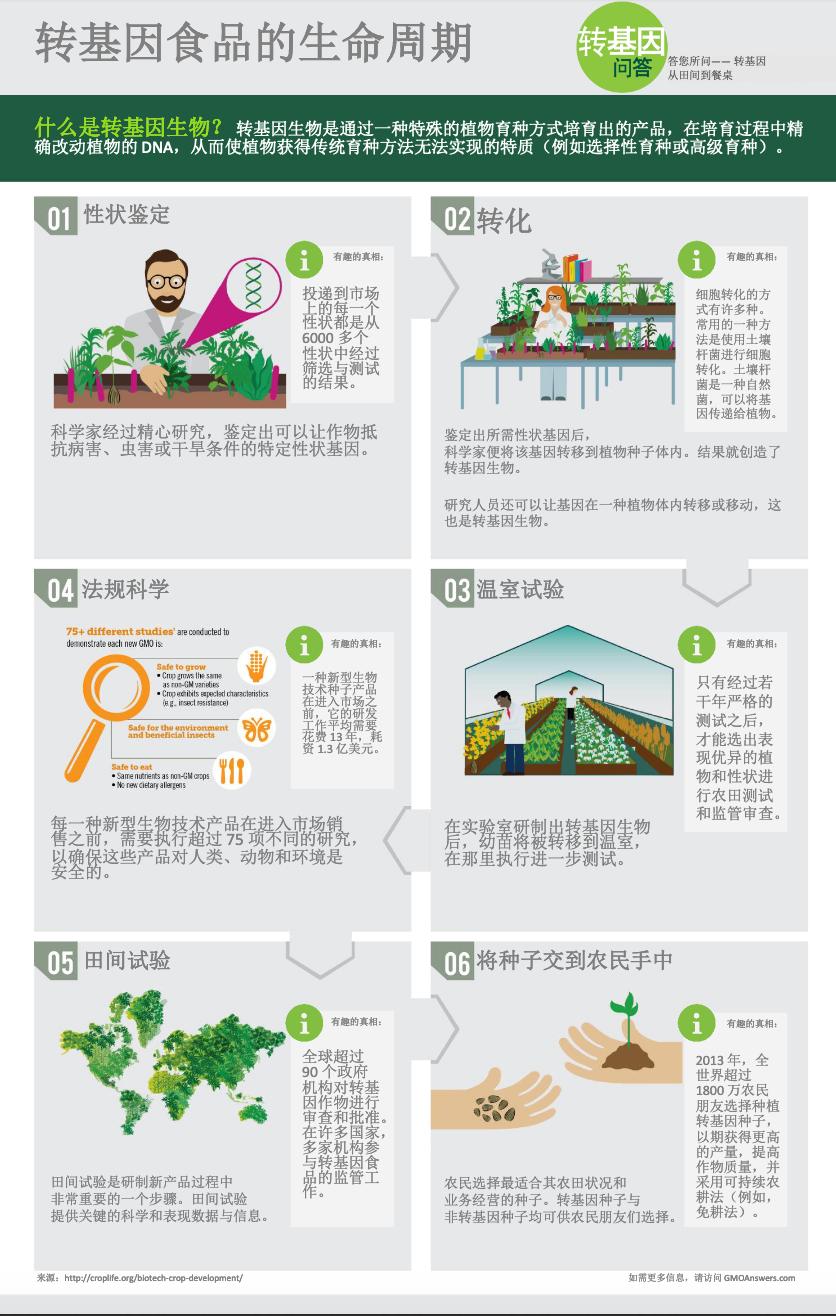 Infographic - Lifecycle of GMOs