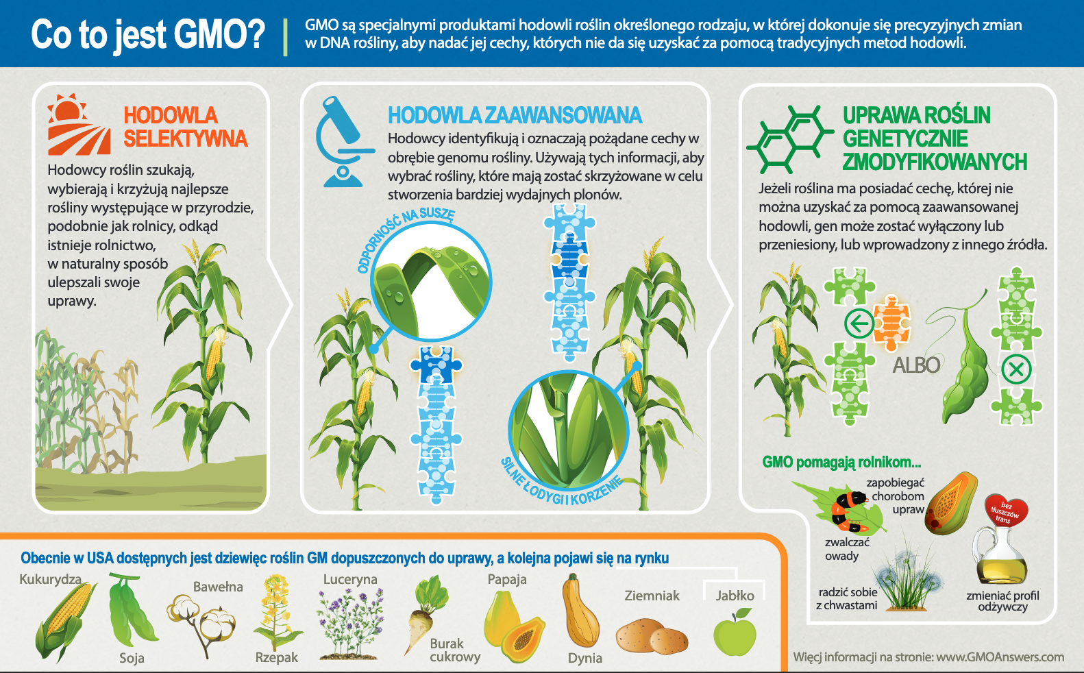 Infographic - What is a GMO
