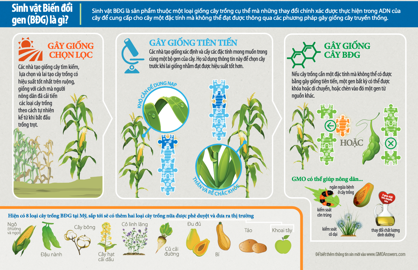 Infographic What is a GMO: 10 Crops