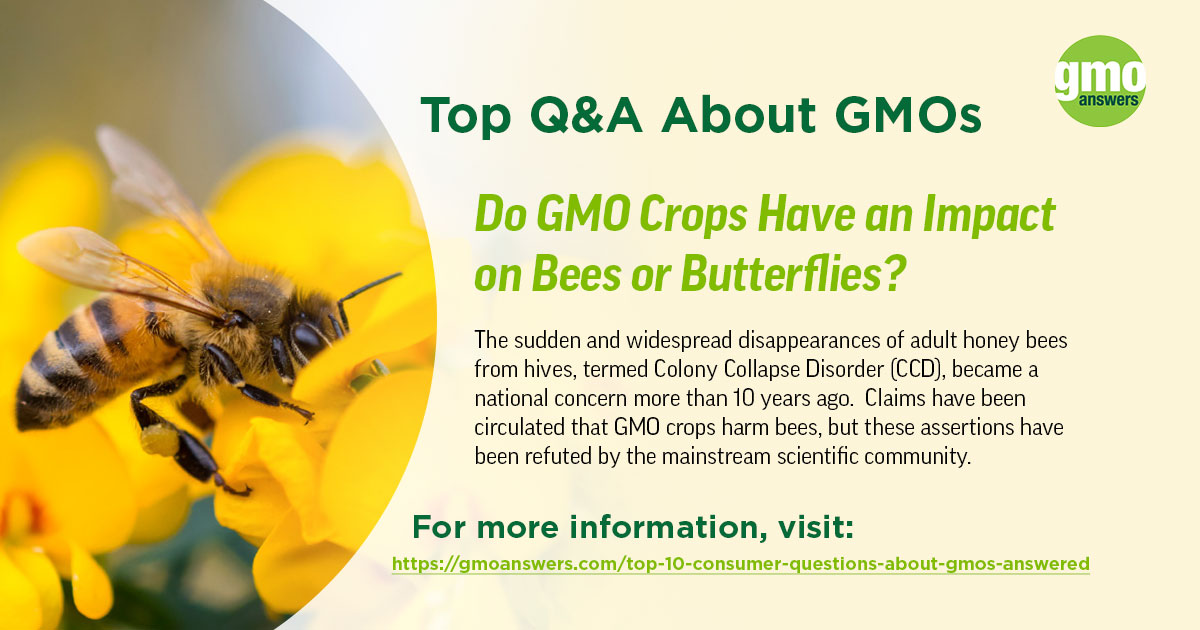 Do GMO Crops Have a negative or positive Impact on Bees or Butterflies?