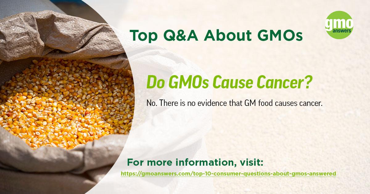 Do GMOs Cause Cancer?