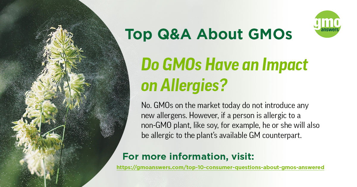 Do GMOs Have an Impact on Allergies?