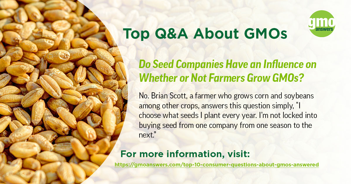 Do Seed Companies Have an Influence on Whether or Not Farmers Grow GMOs?