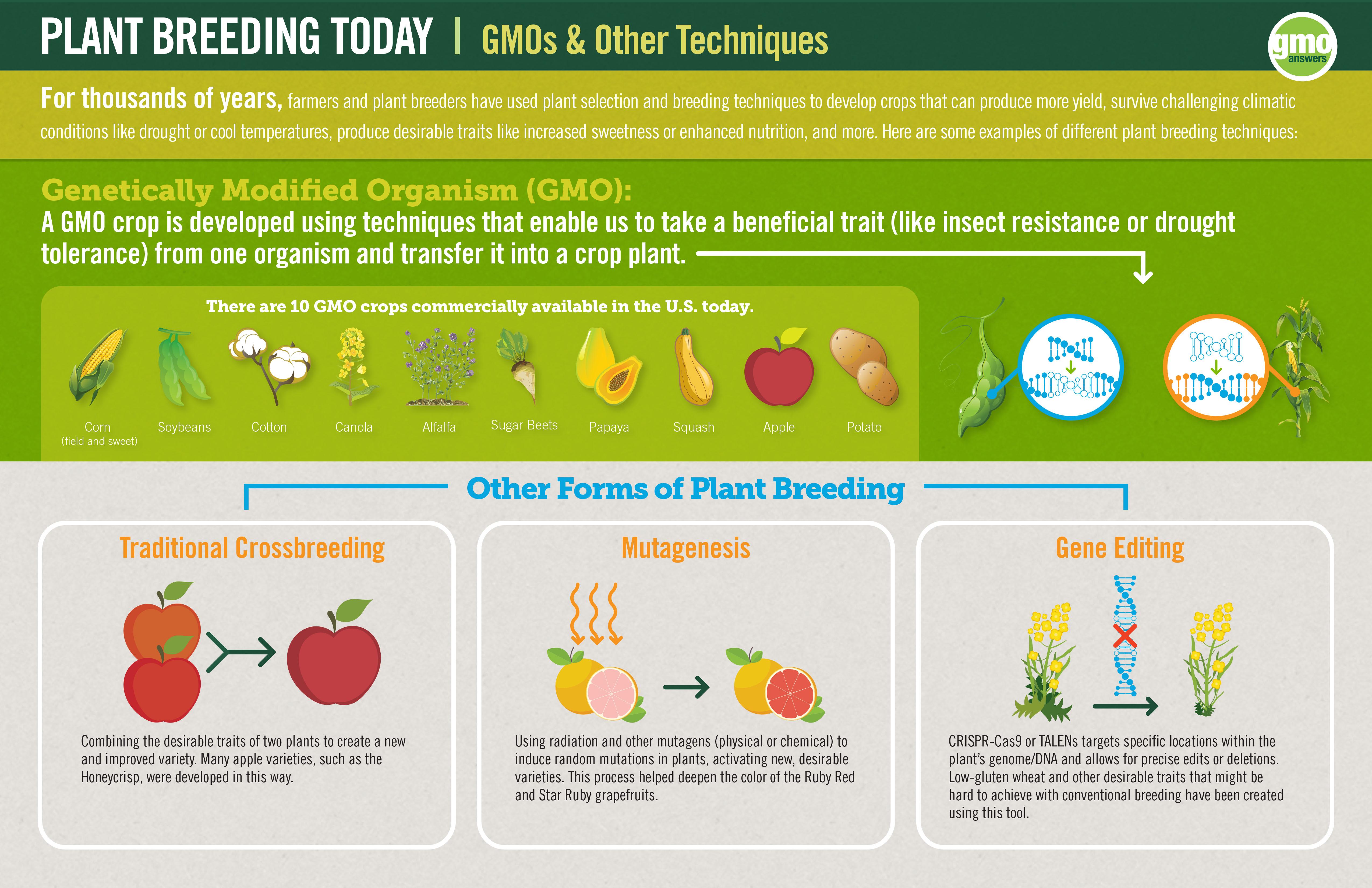 Plant bleeding infographic
