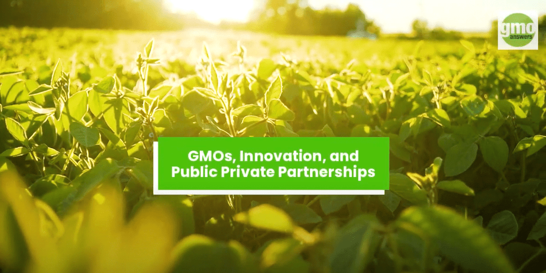 The Benefits of PPPs for GMO development