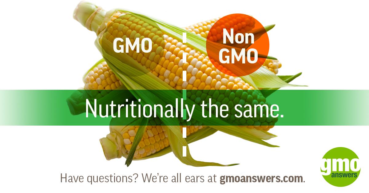 Navigating GMO and Non-GMO Corn