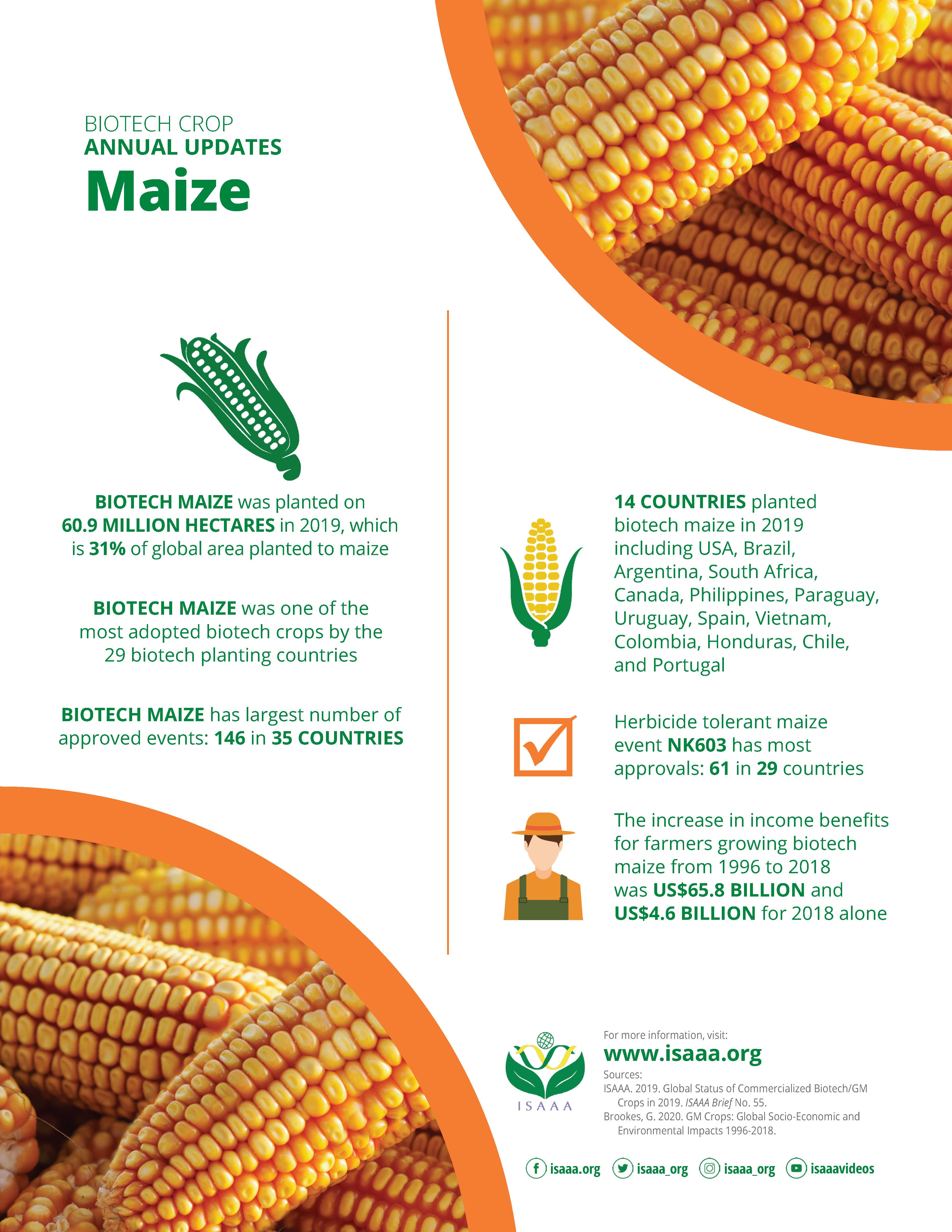 Understanding Maize - Annual Update