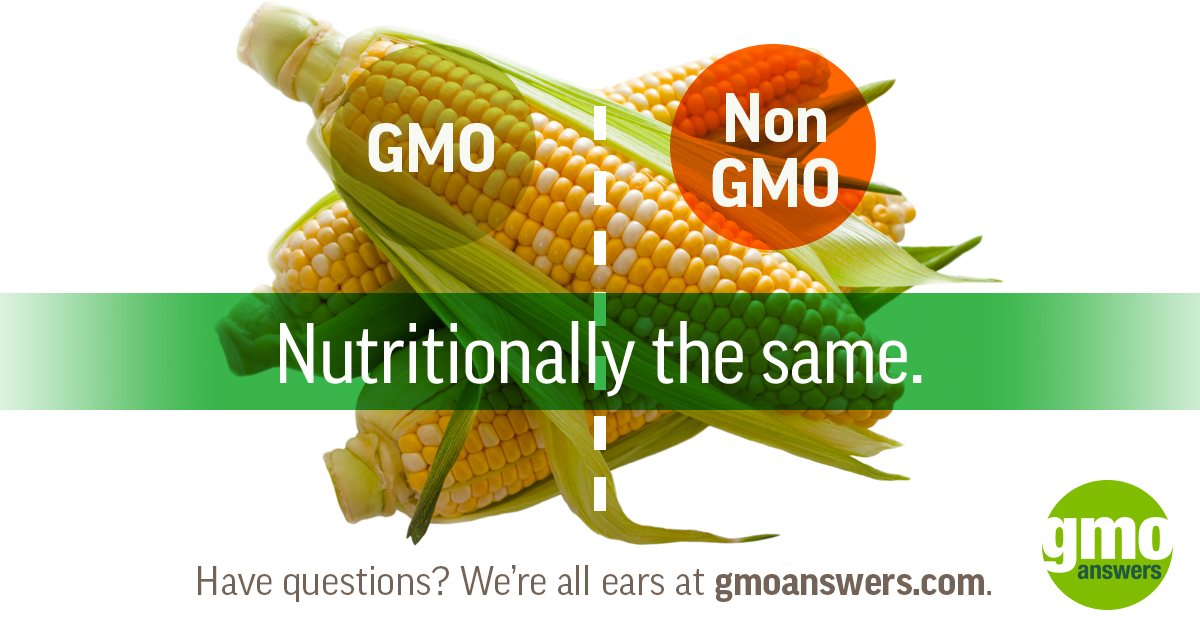 https://gmoanswers.com/sites/default/files/Corn_1200x630_0.jpg