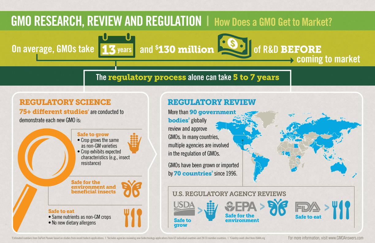 GMO regulation: How Does a GMO Get to Market Infographic