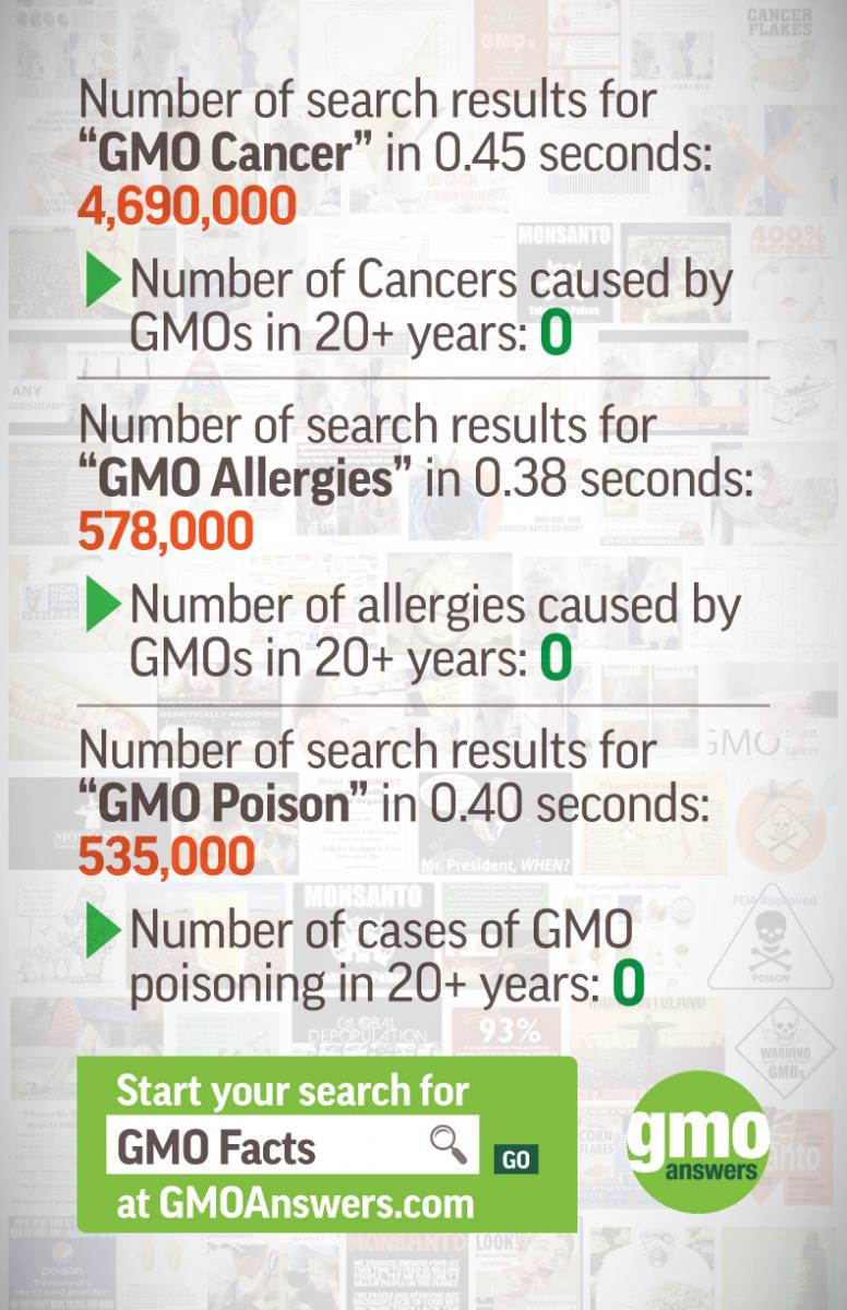 gmo dangers search