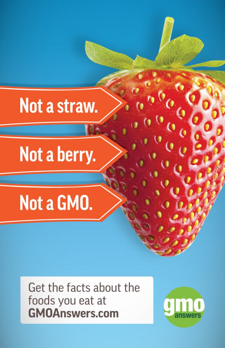 No GMO Strawberries