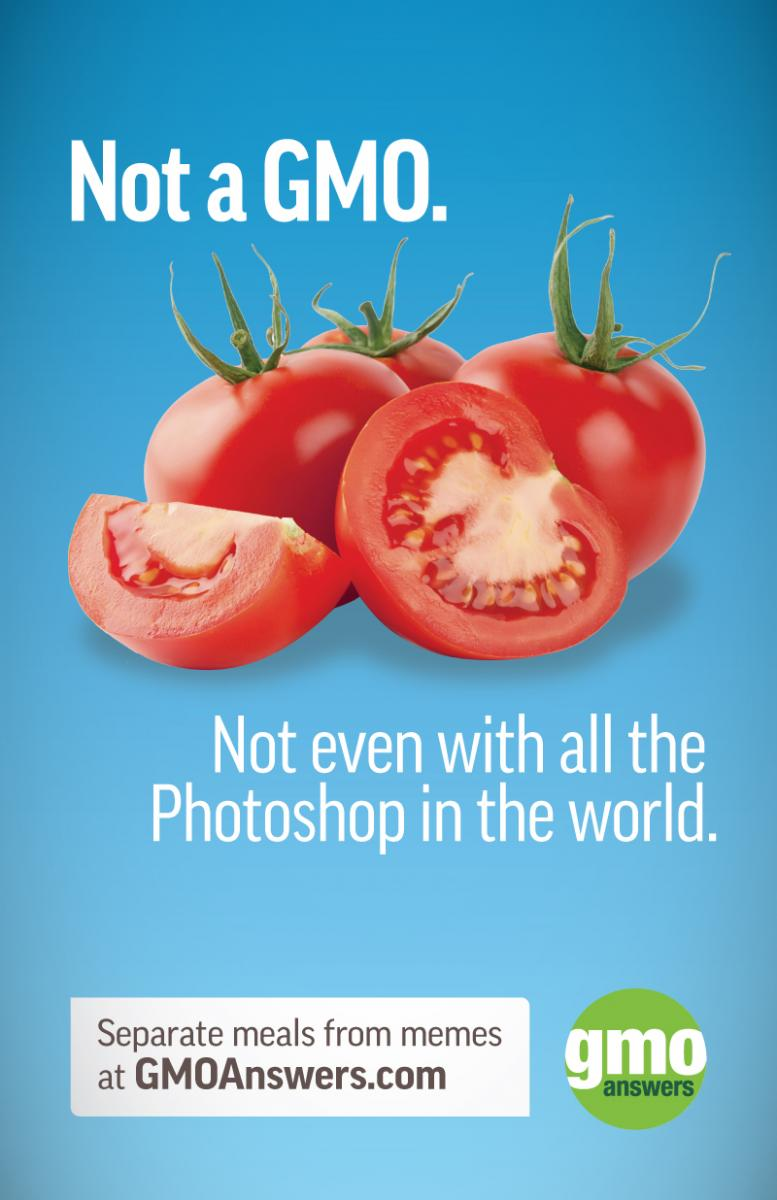 Tomatoes are not a GMO