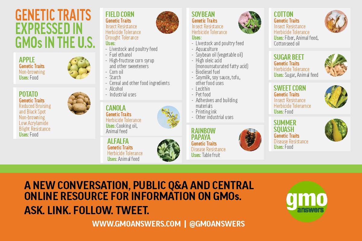 Current GMO Crops | GMO Answers