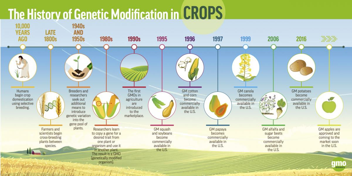 history of genetic modification in crops gmos