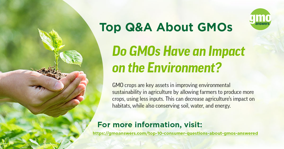 Do GMOs Have an Impact on the Environment?
