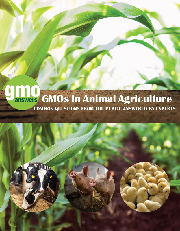 GMOs in Animal Agriculture