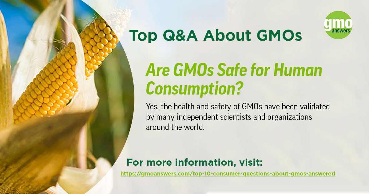 Are GMOs Safe For Human Consumption?