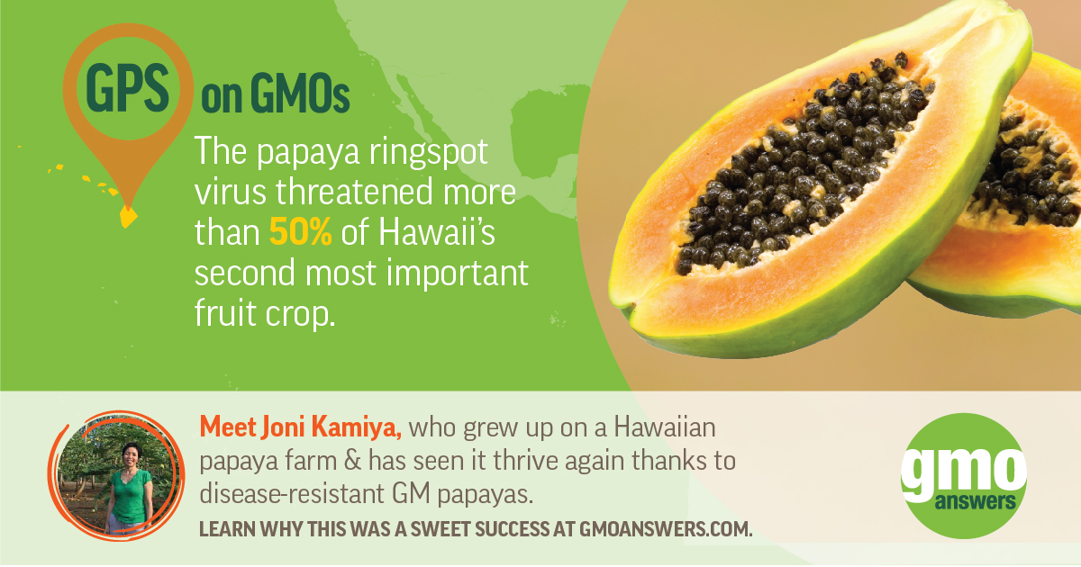 GMO papaya ringspot virus