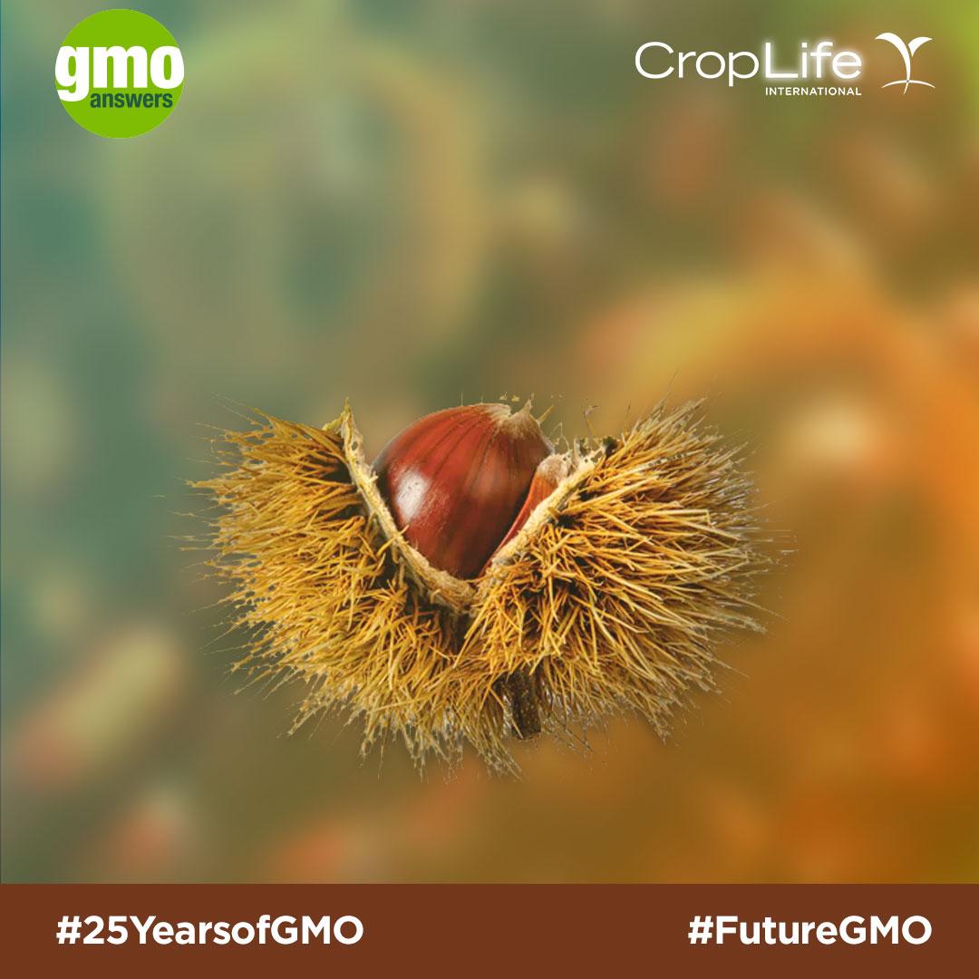 GMO chestnuts