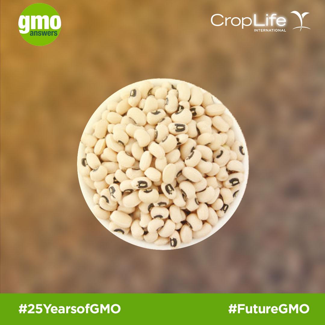 GMO Cowpea