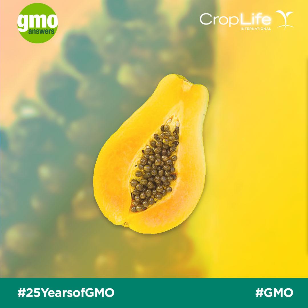 GMO Papaya