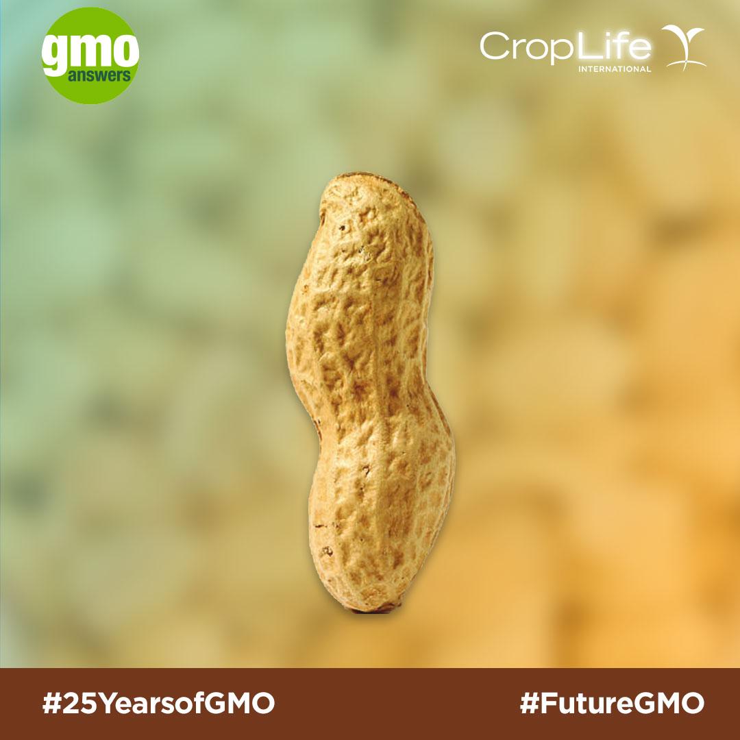 GMO peanuts