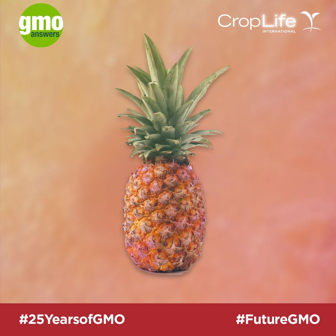 GMO pineapple