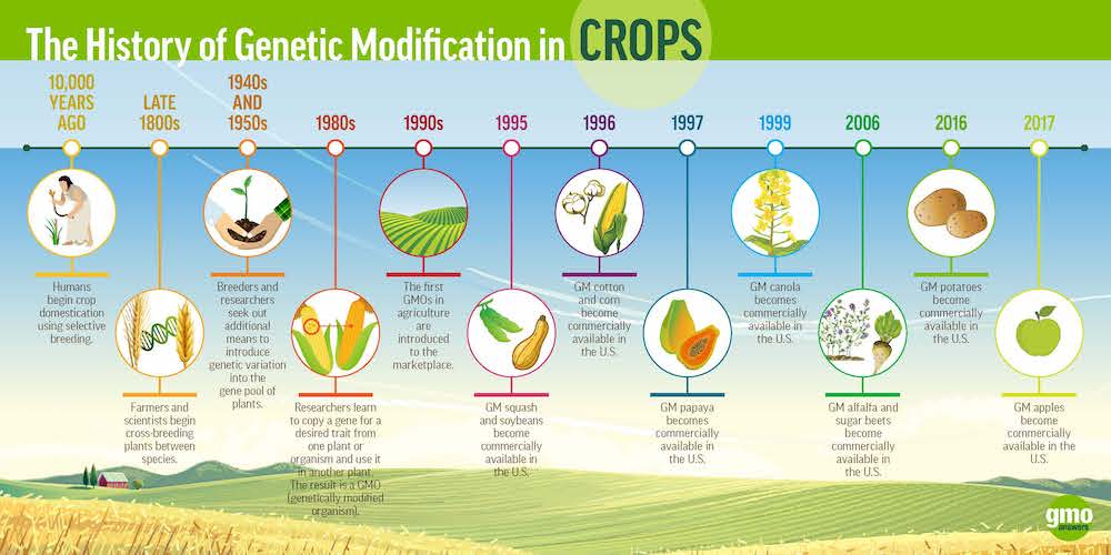 History of GMO Crops