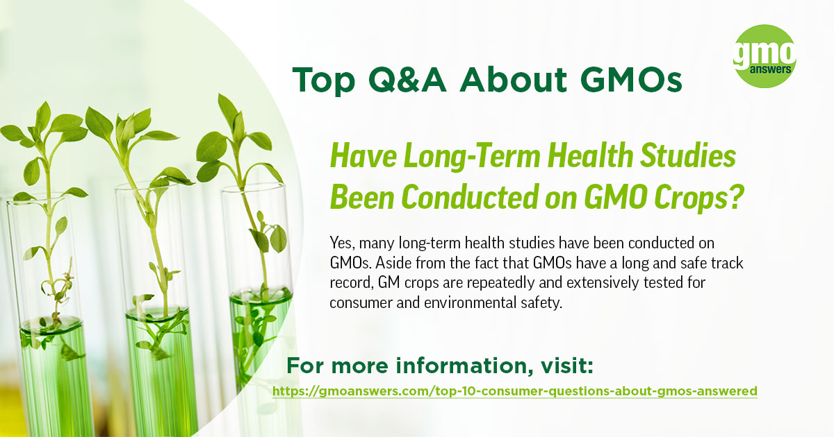 Have Long-Term Health Studies Been Conducted on GMO Crops?