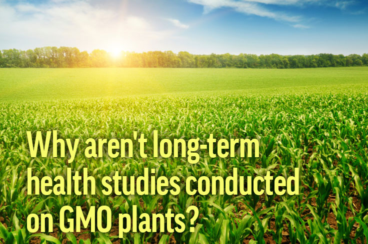 Do GMOs Increase Allergies?