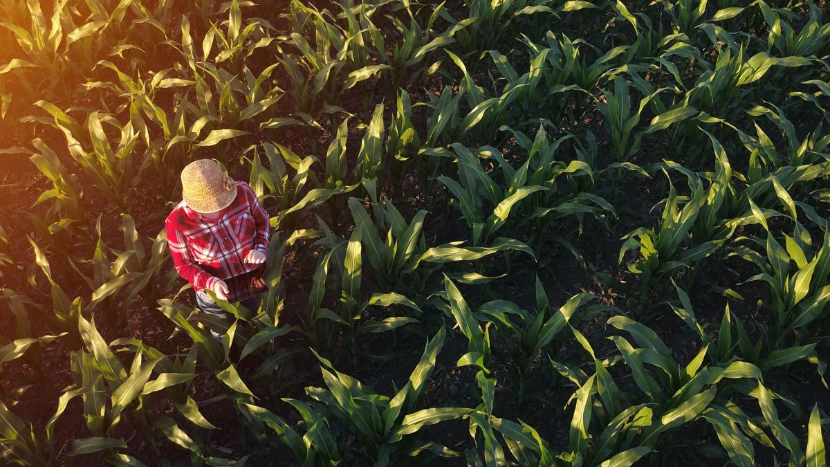4 things millennials should know (and love!) about food & farming