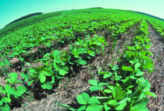 How Do Farmers Keep Their GMO Soil Healthy?
