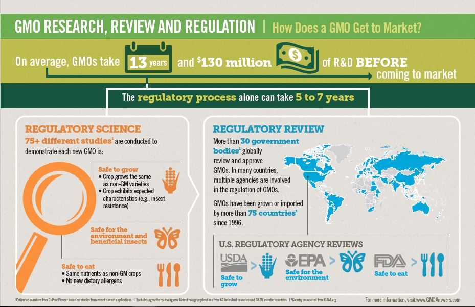 Infographic: GMO Research, Review And Regulation