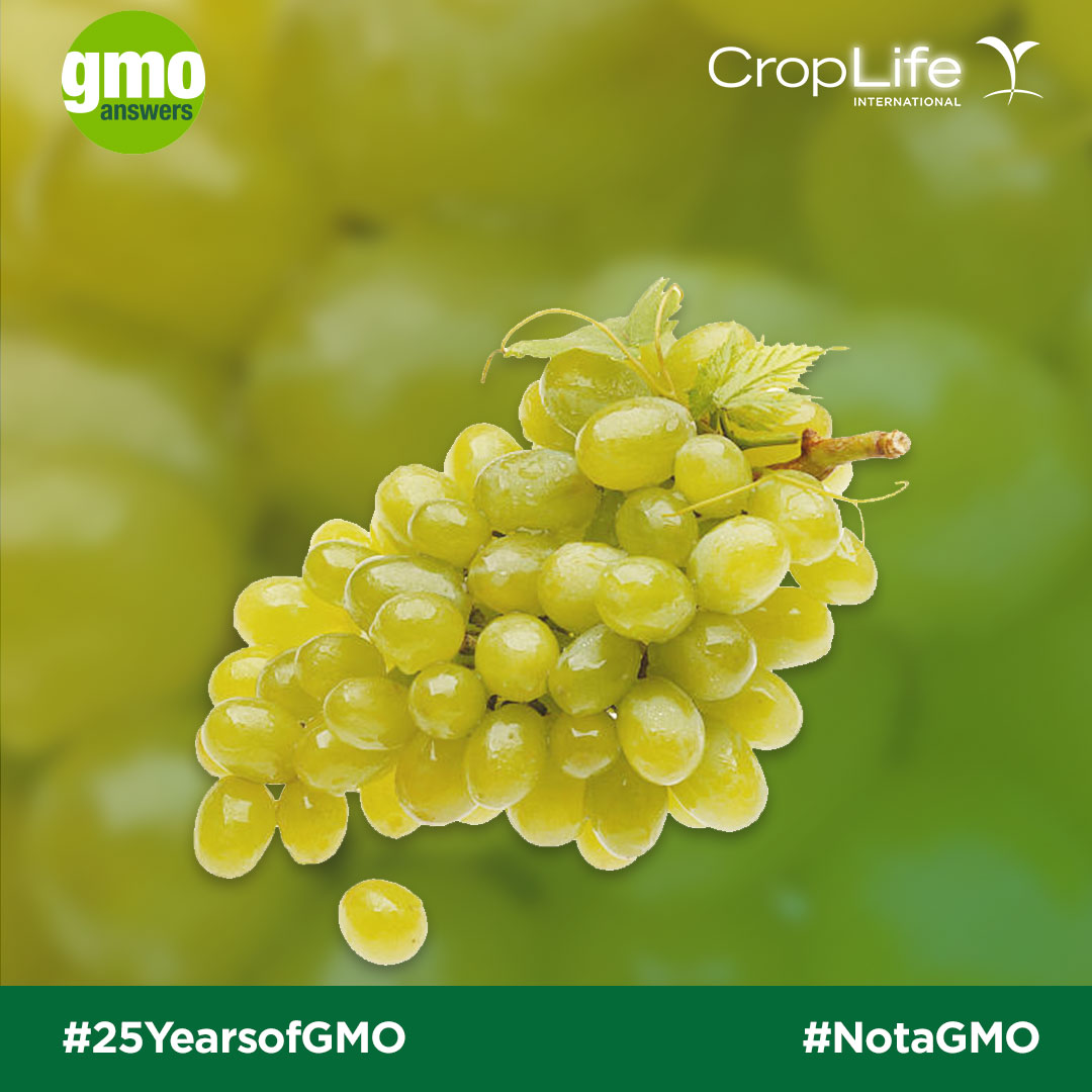 Seedless grapes are not GMOs