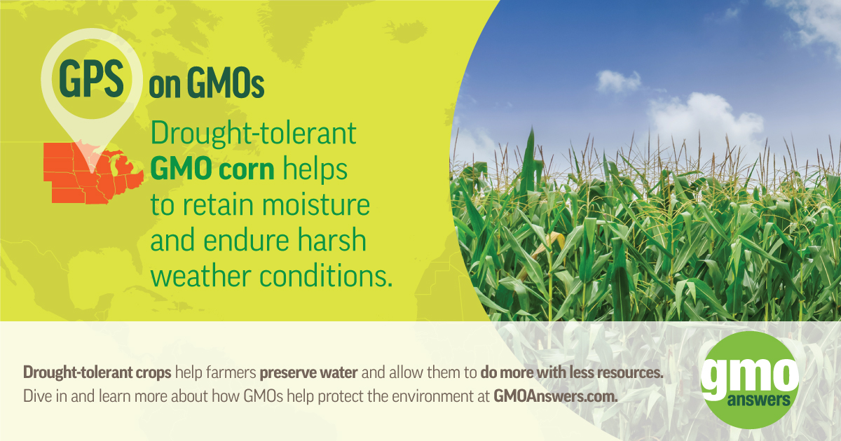 SOCIAL TILE: GPS on GMOs – GMO Corn