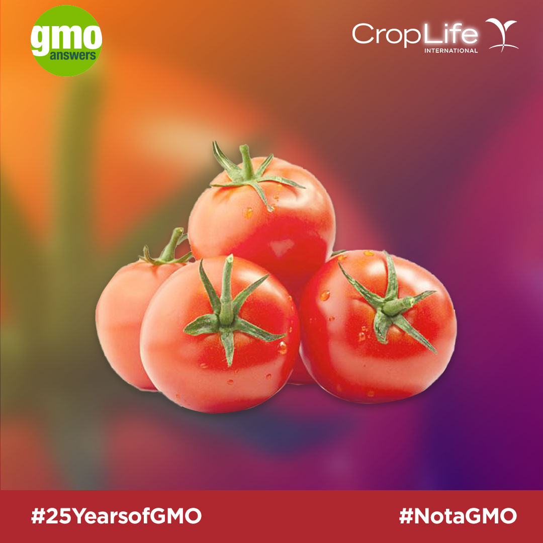 Tomatoes are not GMOs