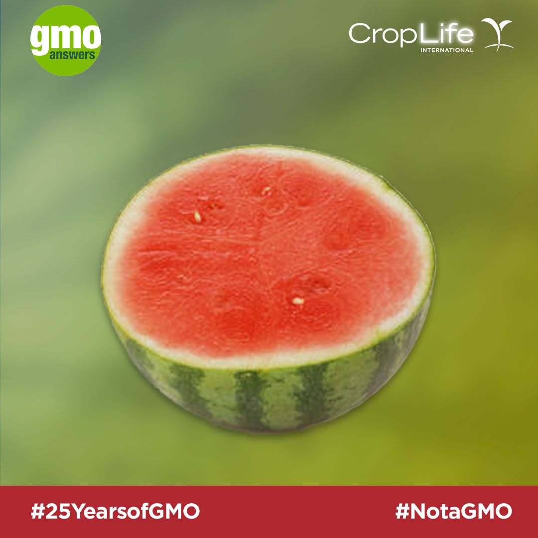 Seedless fruits are not GMOs