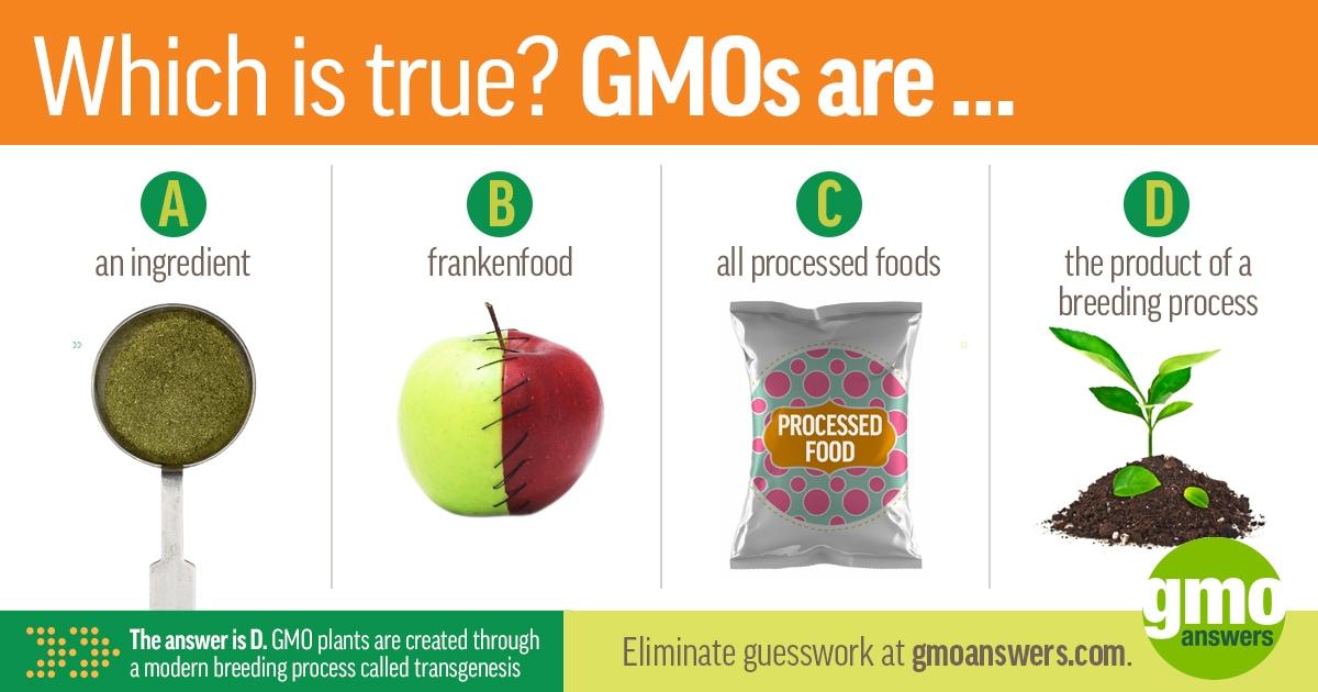 GMO definition