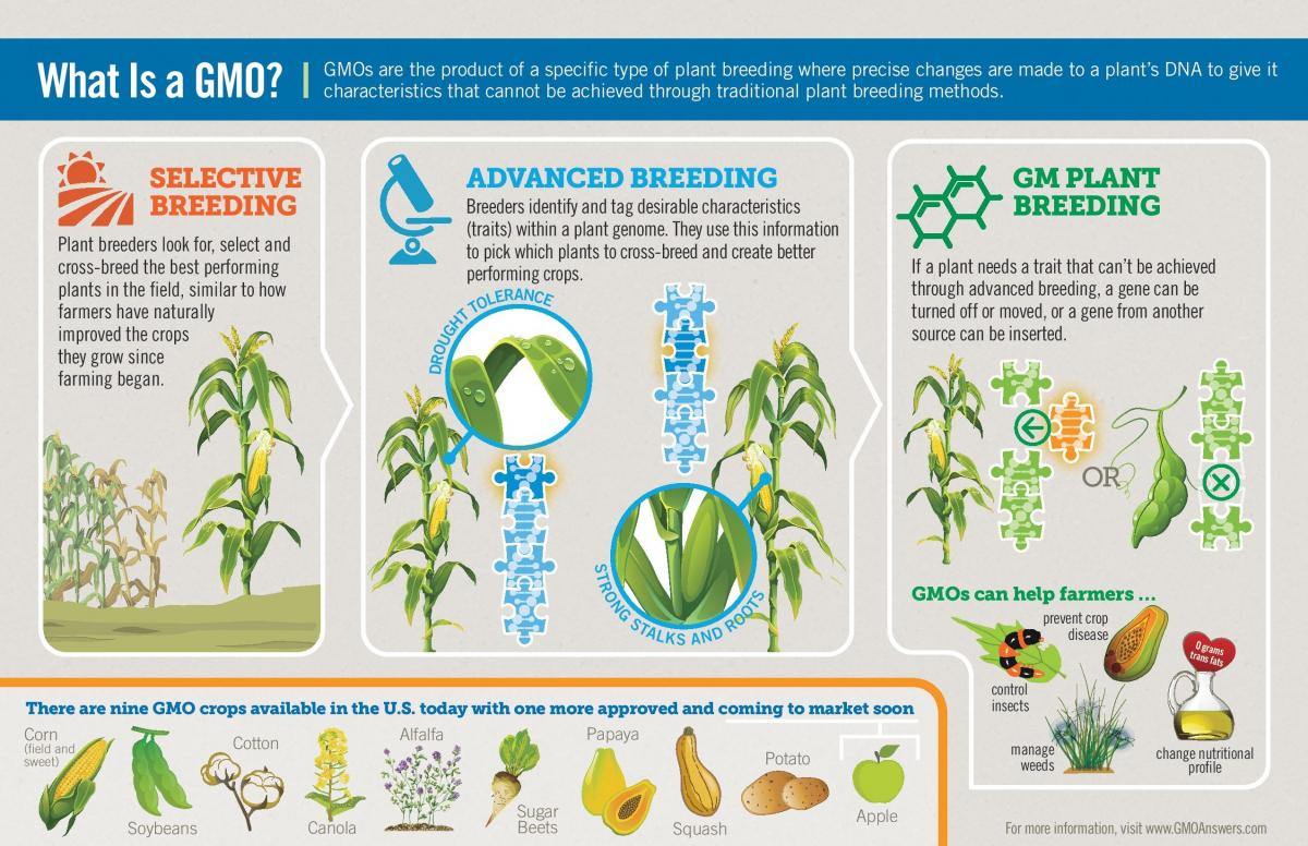 Advantage To Making Genetically Modified Foods