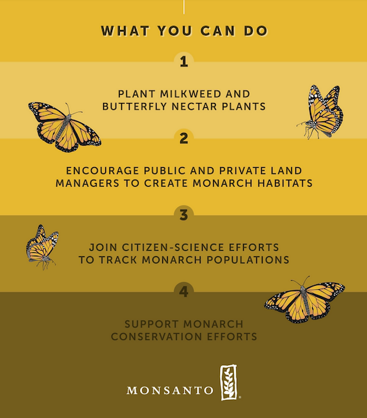 Monsanto: What you can do to support monarch butterfly conservation efforts