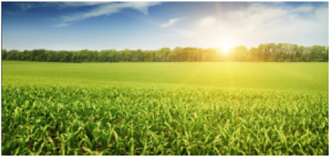 Growing More with Less: Learn about Drought Resistant Crops