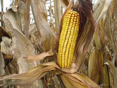 The Costs Of Gmo Labeling Gmo Answers