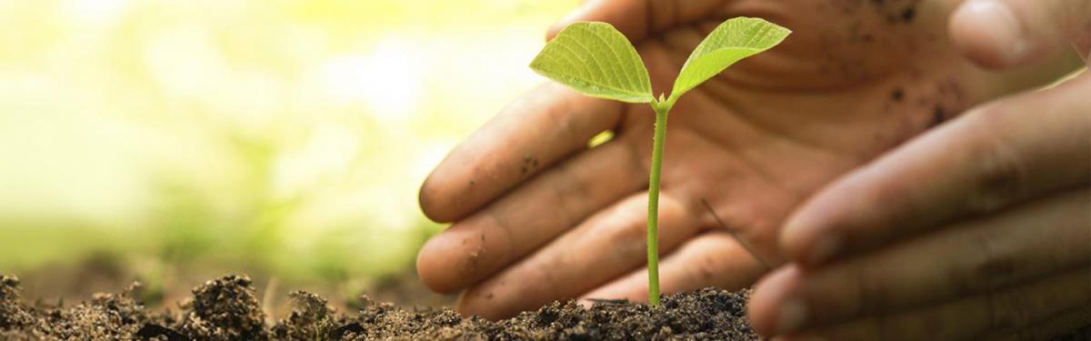 GMO seed