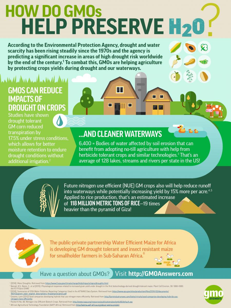 How GMOs help conserve water