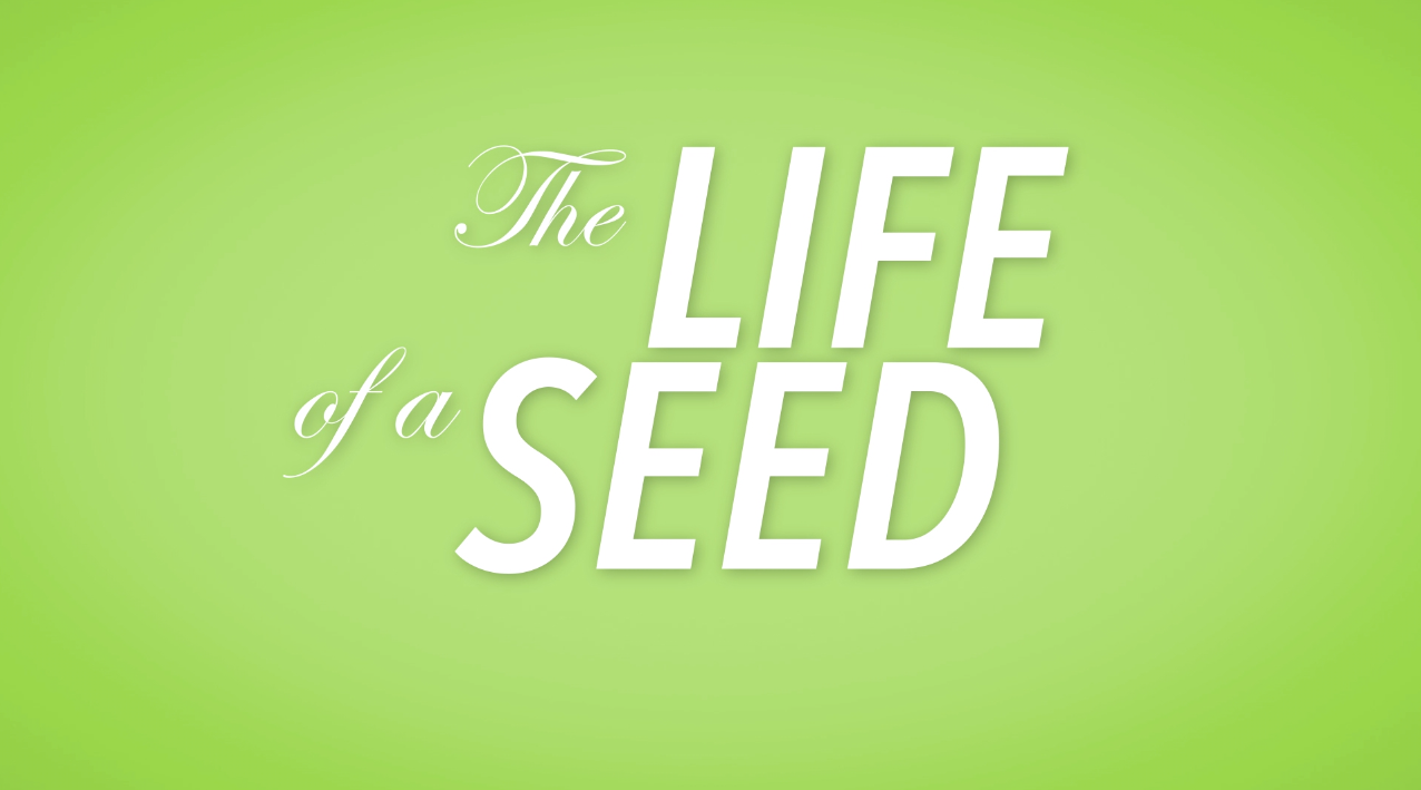 Life of a Seed