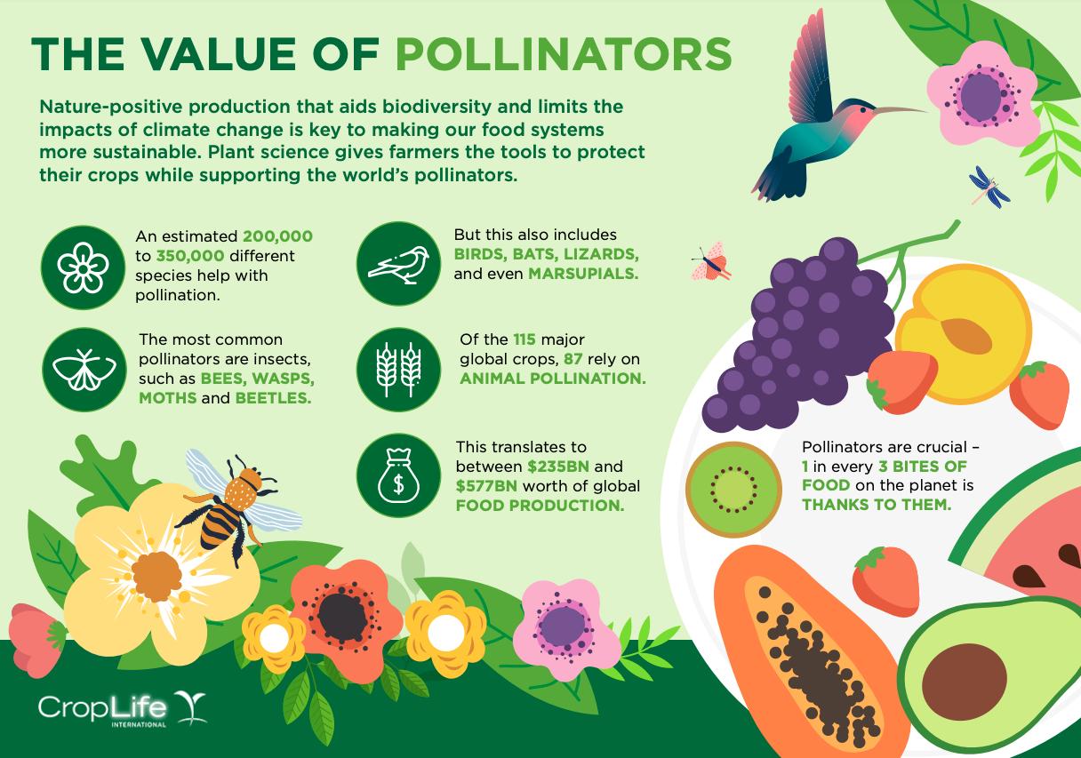 Impact of GMOs on pollinators