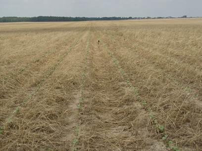 cover crop strip till wide angle